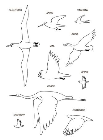 Flying birds with text names (crane,gull, Albatross, duck, Sparrow, Sandpiper, partridge, owl, swallow ). Vector image silhouettes.
