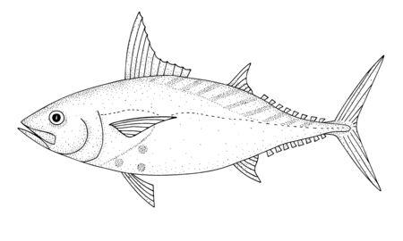 Mackerel tuna. Black hand drawn realistic outline vector image.