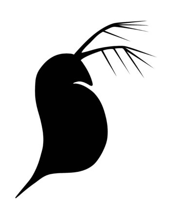 Daphnia or water flea. Black and white hand drawn vector silhouette illustration.