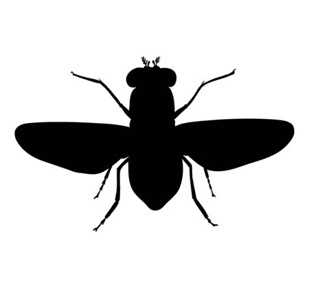 Common fly. Black drawing outline vector image, top view silhouette.