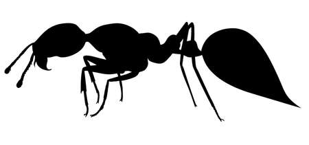 Fire ant. Hand drawing realistic vector silhouette.