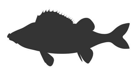 Perch, bass. Black silhouette hand drawing realistic vector image.