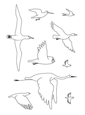 Different flying birds. Vector image line silhouettes set.
