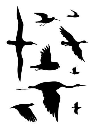 Birds. Vector black drawing silhouette image set. Vectores