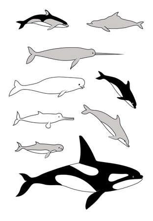 Marine mammals. Vector black drawing silhouette image set.