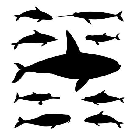 Marine mammals. Vector black drawing silhouette image set.