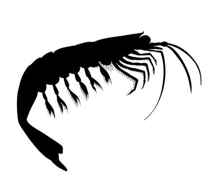 Krill. Hand drawn black vector silhouette realistic illustration.
