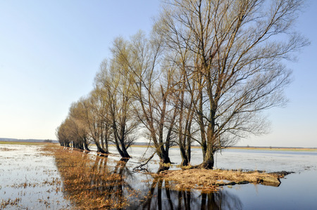 overflow: Poland  Biebrza national park  Overflow areas of the river biebrza