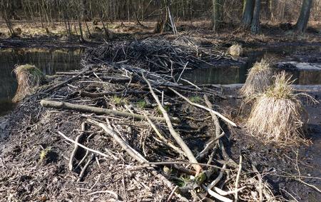 bogs: Poland  Old river bed of the Pilica river  Boggy areas, bogs, black alder carr