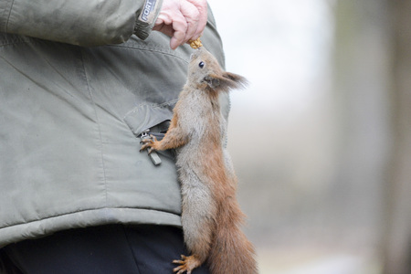 confide: Squirrel. Feeding wild animals.