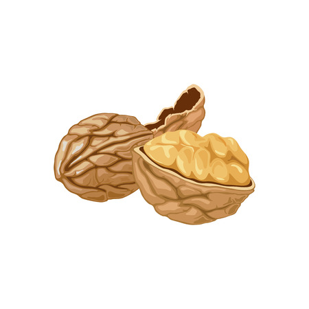 illustration of a walnut peeled whole, cracked into halves. Food symbol collection. Whole nuts and walnut kernels. Nutrition and agriculture concept.