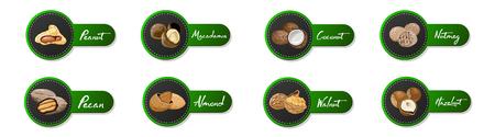 Ensemble d'icônes nommées noix et graines. étiquettes avec noix, noix de coco, muscade, noisette, noix de pécan, amande, arachide, macadamia. Collection de symboles alimentaires sur fond blanc.