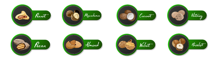 Set of named icons nuts and seeds. labels with walnut, coconut, nutmeg, hazelnut, pecan, almond, peanut, macadamia. Food symbols collection on the white background. Ilustração