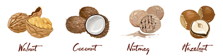 Set of named icons nuts and seeds. Food symbols collection. Nutrition and agriculture concept. Walnut, coconut, nutmeg, hazelnut. Cellulose vegetarian nutrition on the white background.