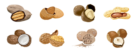 set icons nuts and seeds. Food symbols collection. Nutrition and agriculture concept. Walnut, coconut, nutmeg, hazelnut, pecan, almond, peanut macadamia Nutrition and agriculture Ilustração