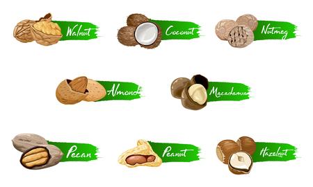 Satz von benannten Symbolen Nüsse und Samen. Nüsse-Logo-Set. Etiketten mit Walnuss, Kokosnuss, Muskatnuss, Haselnuss, Pekannuss, Mandel, Erdnuss, Macadamia. Lebensmittelsymbolsammlung auf dem weißen Hintergrund.