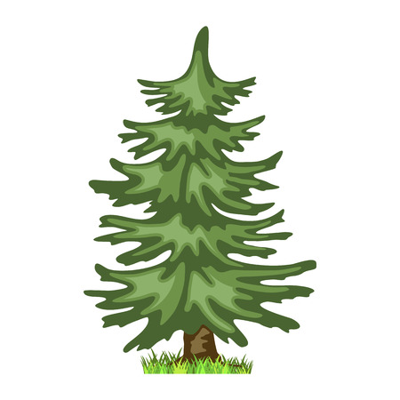 Conifer tree in four seasons - spring, summer, autumn, winter. Nature and ecology. Natural object for landscape design or park. Cartoon style. Green tree illustration Isolated on white background.