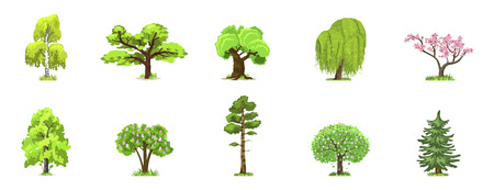 Deciduous trees in four seasons - spring, summer, autumn, winter. Nature and ecology. Natural object for landscape design or park. Cartoon style. Green trees illustration Isolated on white background. Illustration
