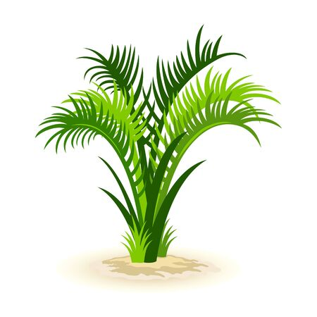 Isolated cartoon vector image shows green roystonea palm in yellow sand on white background