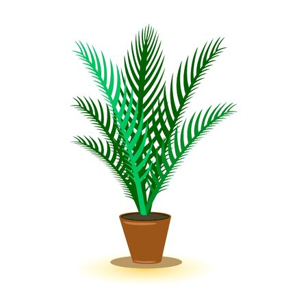Vector image shows green palm room plant in brown pot with dark shadow cartoon isolated illustration