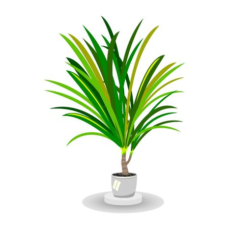 Isolated vector image shows lush green room palm tree in white pot with support on white background