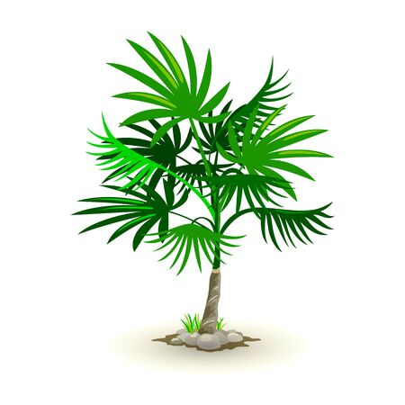 Vector picture shows lush cabbage-palm surrounded by green grass and grey rocks cartoon style Ilustracja