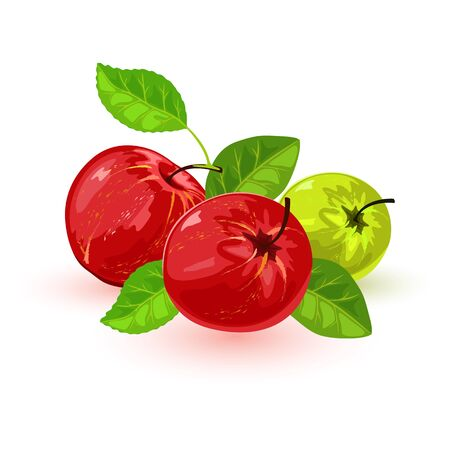 Isolated vector image shows nice juicy red and green apples with leaves on white background cartoon style