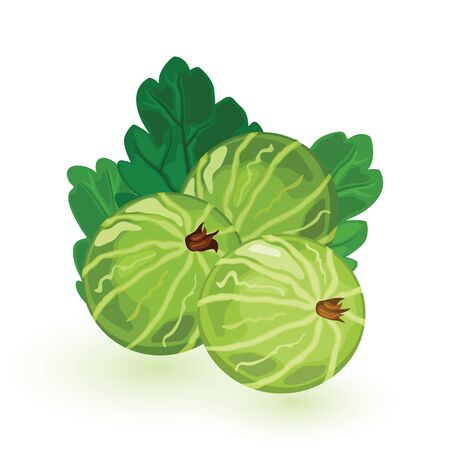 Sweet and sour green gooseberry with leaves. Eatberry is natural antioxidant. Ingredient for healthy food. Cartoon vector icon isolated on white background for packing design, print, advertisement.
