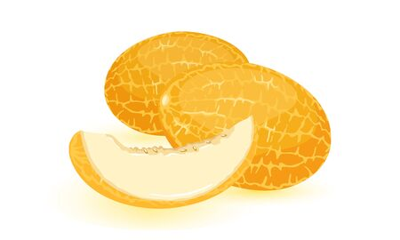 Isolated vector image shows orange ripe melons with cut juicy sweet slice cartoon style on white background
