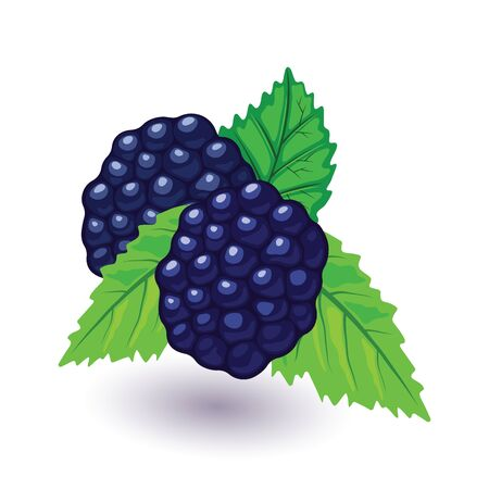 Juicy and fresh blackberry with green leaves. Sweet black raspberry. Garden fruit using for cooking desserts, crumbles, jellies, jams, pies, wine. Cartoon icon isolated on white background.