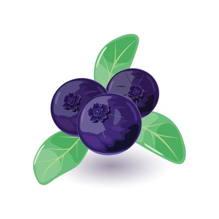 Juicy and fresh blueberry with green leaves. Sweet blue or purple colored bilberry. Huckleberry using for quick frozen, juice, jellies, jams, pies, as addictive to breakfast cereals. Cartoon icon.