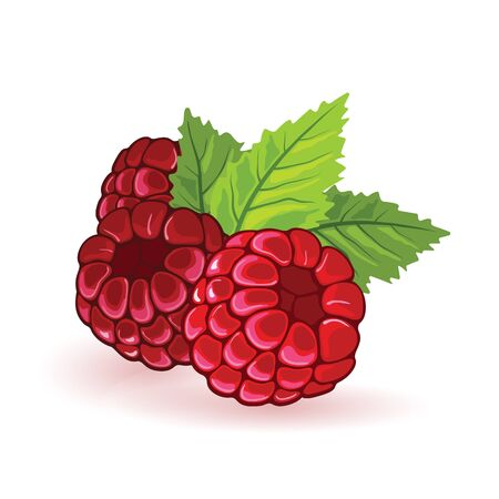Red raspberry with green leaves. Summer fruitage. Three sweet ripe berries. Cartoon vector icon isolated on white background for packing design, print, advertisement. Ingredients for jam.