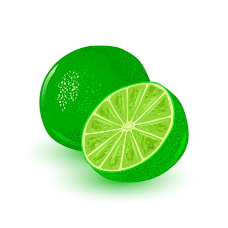 Fresh and juicy lime. Ripe citrus round green fruit. Ingredient with sour flavor using for vegan, vegetarian food, alkaline diet. Vector cartoon illustration for packing, menu, recipe, advertisement.