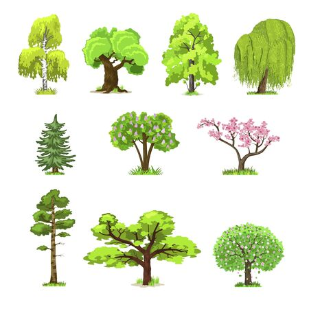 Deciduous trees in four seasons - spring, summer, autumn, winter. Nature and ecology. Natural object for landscape design or park. Cartoon style. Green trees illustration Isolated on white background. Stock Illustratie