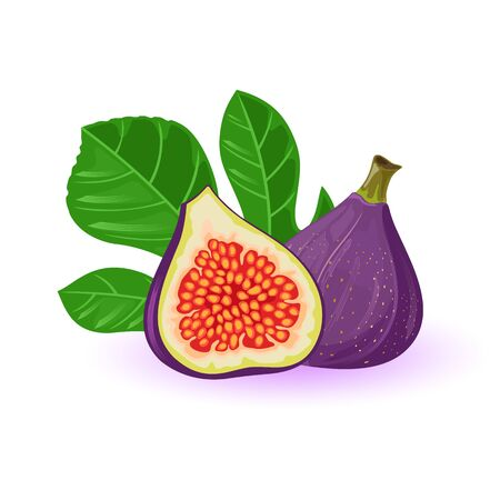 Fresh figs whole and half with leaves. Exotic sweet fruit with purple skin. Source of vitamins and antioxidants. Natural healthy product. Vector cartoon illustration isolated on white background.