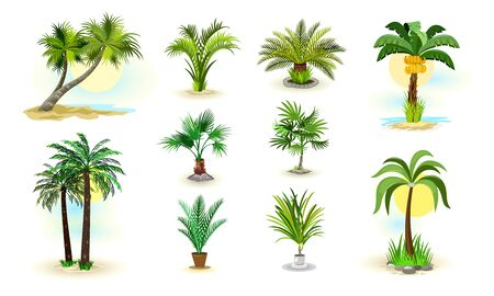 Vector image shows set of different examples of wild and room green palm trees cartoon isolated illustration