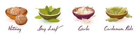 Nutmeg, bay leaves, garlic, cardamom pods. Vector spices assortment set with icons and lettering. Natural products, design elements for packing, recipes, cookbooks, market, shop labels on white.
