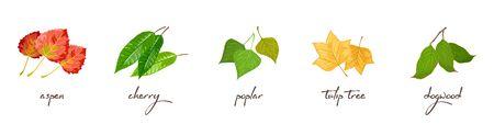Set vettoriale con scritte e illustrazioni vettoriali di pioppo tremulo, ciliegio, pioppo, tulipano, corniolo. Problemi ecologici, inquinamento ambientale, deforestazione, incendi, concetto di protezione della natura.