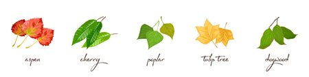 Vector set with lettering and vector illustrations of aspen, cherry, poplar, tulip tree, dogwood. Ecological problems, environmental pollution, deforestation, wildfires, nature protection concept.