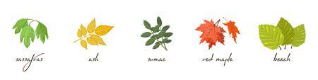 Set vettoriale con scritte e icone vettoriali di sassofrasso, frassino, sommacco, acero, faggio. Elementi di design di vendita autunnale per striscioni, poster, volantini, pubblicità. Accumulazione del fumetto isolata su bianco. Vettoriali