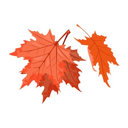 Senescent falling red leaves of maple tree or shrub. National symbol of Canada. Beautiful autumn nature. Relaxation, stress releasing in park, forest concept. Vector cartoon isolated on white.