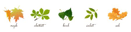 Set with vector lettering and illustrations of maple, chestnut, birch, walnut, oak leaves. Nature, environment protection and wildlife preservation concept. Cartoon collection isolated on white.