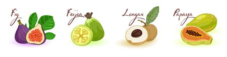 Exotic delicious fresh fruits in row fig, feijoa, longan, papaya. Natural healthy products, organic food. Best for vegetarian, vegan cuisine. Cartoon vector set isolated on white background.