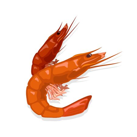 Prepared steamed or boiled red tiger shrimps. Cooked prawn. Seafood for gourmet. Source of omega-3 fatty acids, iodine and protein. Vector illustration on white for market label, food packing, menu. Stok Fotoğraf - 134140968