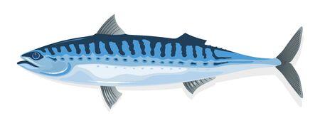 Sgombro dal corpo allungato, blu acciaio segnato con linee nere ondulate dorsalmente e muso lungo e appuntito. Pesce scomber fresco, congelato, salato o affumicato. Illustrazione del fumetto di vettore isolata su bianco.
