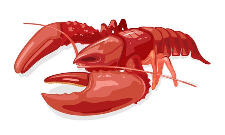 Cooked boiled red lobster or langouste. Seafood. Marine animal. Vector cartoon illustration isolated on white background for market label, food packing, recipes, cookbook, menu, advertising.