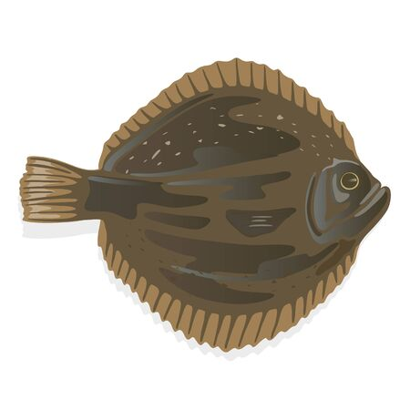 Plaice or flatfish, flounder which has dark brown skin on one side and white on the other. Seafood. Fish using for frying and baking. Vector cartoon illustration isolated on white background.