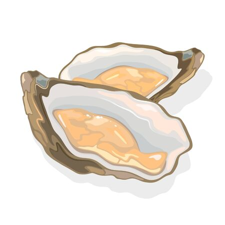 Opened shellfish, oysters with soft body in a shell. Clam bivalve mollusk. Seafood for gourmet. Exotic meal, delicacy dish. Vector cartoon illustration isolated on white background.