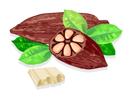 Delicious white chocolate bar made from cocoa beans. Fresh cacao pods and green leaves. Organic natural product. Source of carbohydrate. Sweet snack. Vector realistic isolated illustration.