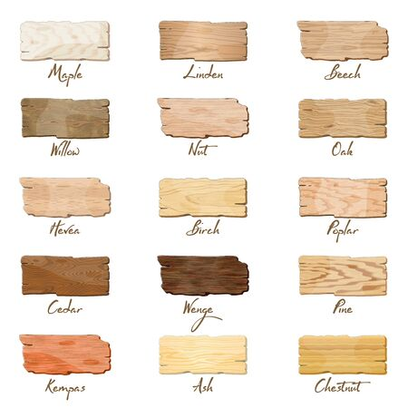 Big vector set with samples of maple, oak, birch, ash, chestnut, linden, willow, poplar, pine, cedar, beech, nut, hevea, kempas wenge Wooden boards banners texture isolated on white background Çizim